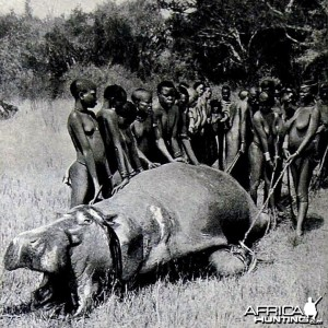 Hunting Hippo