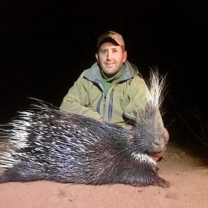 South Africa Hunting African Porcupine