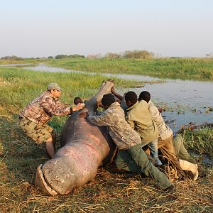 Hippo Hunting in Namibia