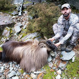 New Zealand Hunting Tahr