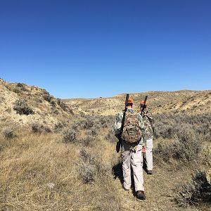 Wyoming USA Hunting Deer & Pronghorn