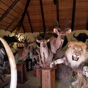 Taxidermist Trophy Room