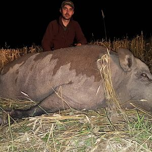 Romania Hunting Boar