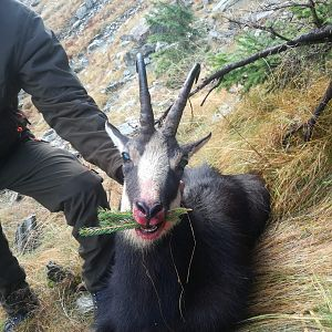 Hunting Carpathian Chamois in Romania
