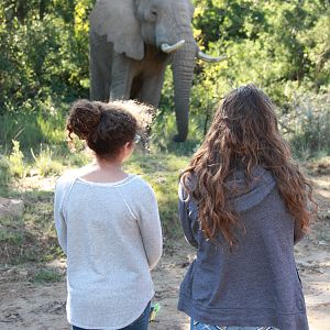 Viewing Elephant South Africa