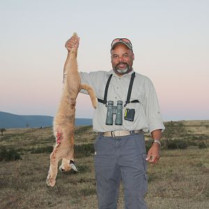 South Africa Hunting Caracal