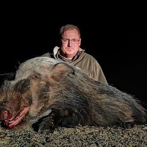 Hunting Bushpig in South Africa