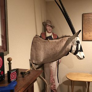 Gemsbok Shoulder Mount Taxidermy