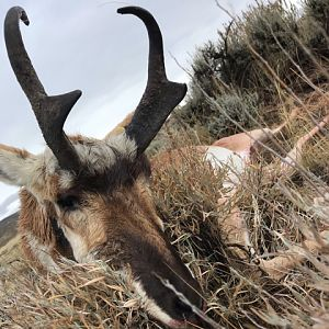 Hunting Pronghorn Antelope in Colorado USA