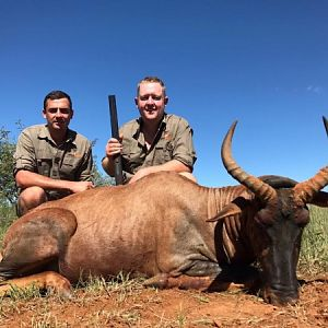 South Africa Hunting Tsessebe