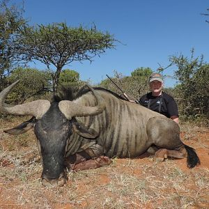 Hunting wildebeest South Africa