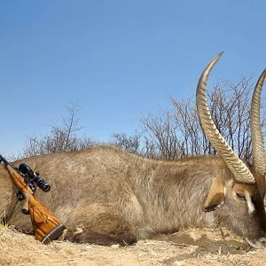 Waterbuck Hunting Namibia