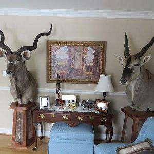 Kudu & Eland Shoulder Mount Pedestal Taxidermy