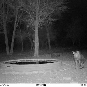 Trial Cam Pictures of Brown Hyena in South Africa