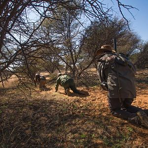 Hunting & Stalking Game in Namibia
