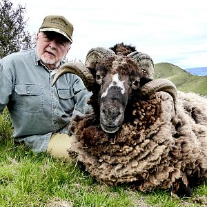 New Zealand Hunting Arapawa Ram