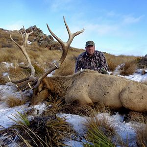 "378"" Inch Elk Hunting New Zealand"
