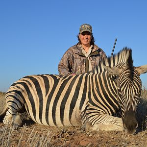 Hunt Burchell's Plain Zebra in South Africa