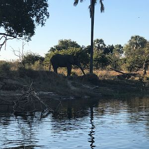 Lady Livingstone river cruise viewing Elephants