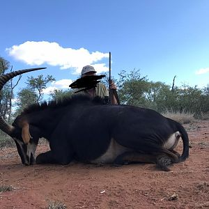 South Africa Hunt SCI Gold Sable Antelope