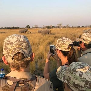Viewing Elephant Caprivi Namibia