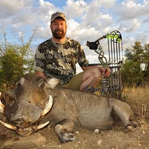 Bow Hunting Warthog in Namibia