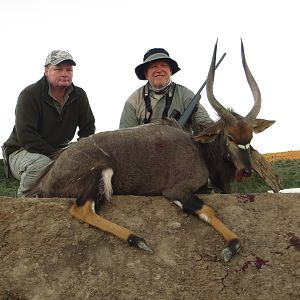 Hunt Nyala in South Africa