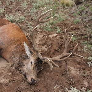 Bow Hunt Red Stag in Argentina