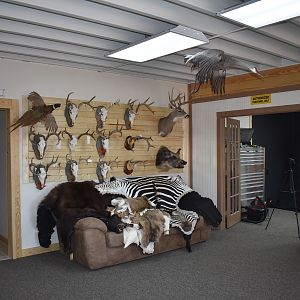 Top of Texas Taxidermy New Showroom and Studio