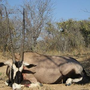 Hunt Gemsbok in South Africa