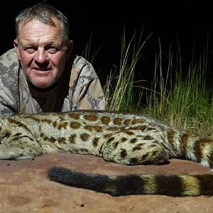 South Africa Hunting Genet Cat