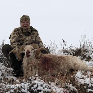 Texas USA Hunting Texas Dall Sheep