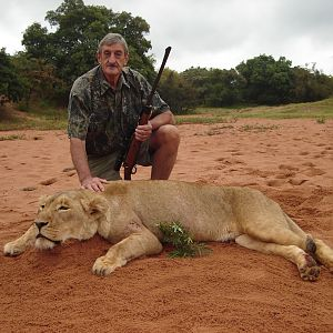 Hunt Lioness in South Africa