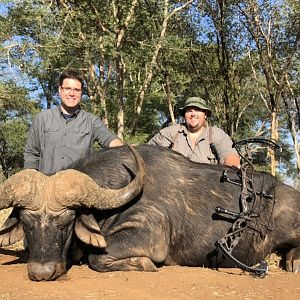 South Africa Bow Hunting Cape Buffalo