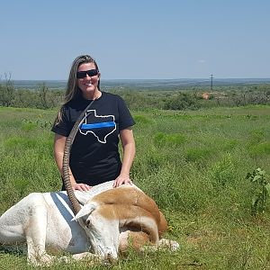 Scimitar Oryx Hunting Texas USA