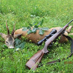 Roe Deer Hunting Romania