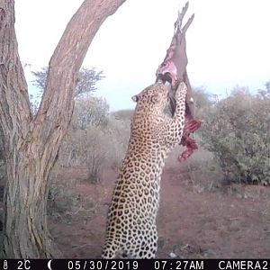 Leopard Trail Cam Pictures South Africa