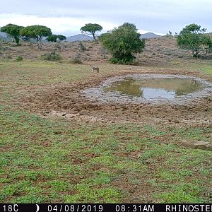 Trail Cam Pictures of Jackal in South Africa