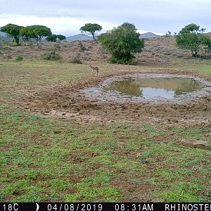Jackal Trail Cam Pictures South Africa