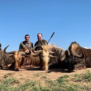 South Africa Hunt Wildebeest Slam