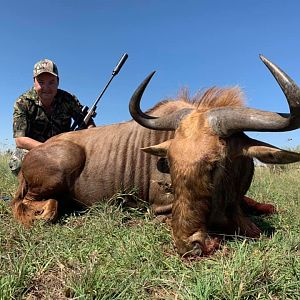 Golden Wildebeest Hunt South Africa