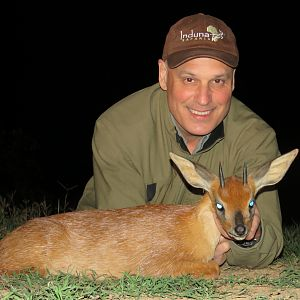 Cape Grysbok Hunting South Africa
