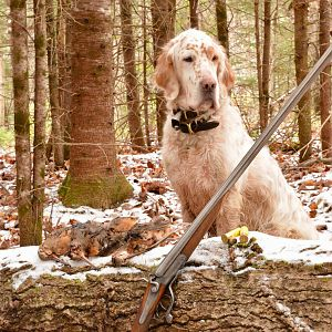New England Hunt Late Season Woodcock