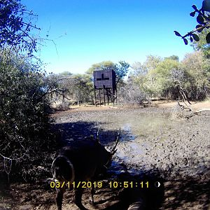 Waterbuck Trail Cam Pictures South Africa