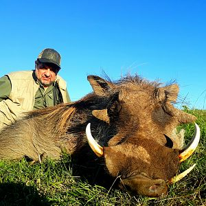 Warthog Hunt South Africa