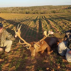 Hunting Red Stag in Texas USA
