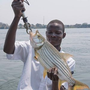Tigerfish Fishing Zimbabwe