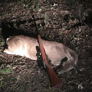Hunt Deer in Texas USA
