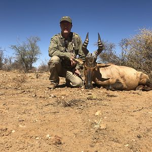 Red Hartebeest Hunting Namibia