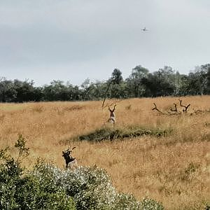 Kudu Walk & Stalk Bow Hunt